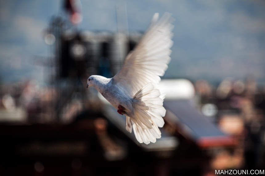 dove, bakhtapur,Nepal, bird, white bird, white dove, love bird, rooftop, flying bird, wings,